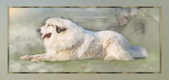Great Pyrenees Aaron